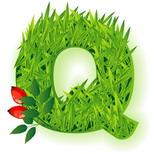 Cartoline onomastico con nome: Lettera Q